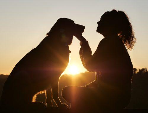 Comment faire accepter son chien par ses voisins
